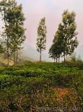 Photo 32700 Sq. ft Land for Sale in ooty