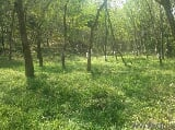 Photo 200 Sq. ft Land for Sale in Punalur, Kollam