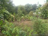 Photo 2000 Sq. ft Plot for Sale in Muringoor, Thrissur