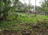 Photo 21780 Sq. ft Plot for Sale in Vellimadukunnu,...