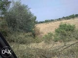 Photo 9900 Sq. ft Plot for Sale in Pathankot1, Pathankot