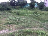 Photo 1088 Sq. ft Plot for Sale in khajurtikra, Bargarh