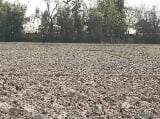 Photo 10000 Sq. ft Plot for Sale in Patsoi, Imphal