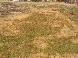 Photo 2000 Sq. ft Plot for Sale in Remuna, Balasore