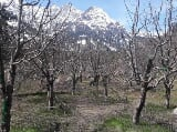 Photo 33750 Sq. ft Plot for Sale in Old Manali
